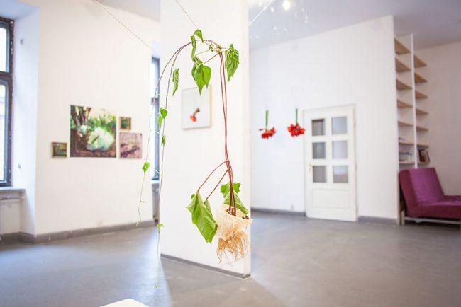 wystawa Martwe Natury Urszuli Kluz Knopek w Cieszynie